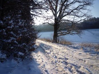 winter-eb31b40e2f